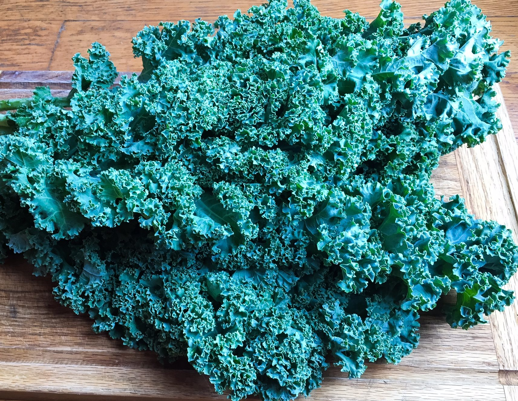 harvest salad, kale salad, kale harvest salad, harvest kale salad, sweet potato, quinoa, kale, kale and sweet potato salad